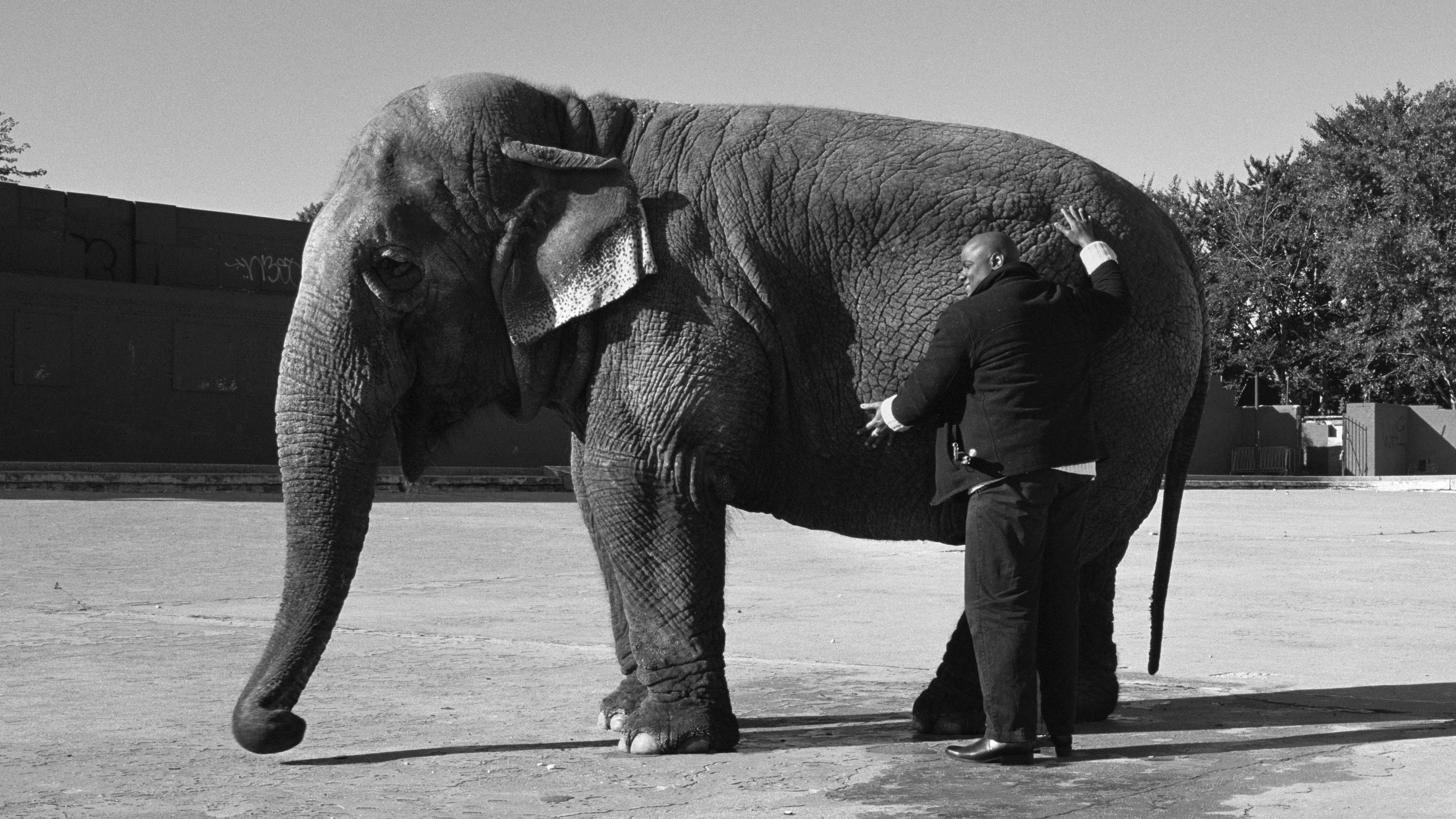 Black-and-white image of a standing blind man touching the hide of a standing elephant with both hands